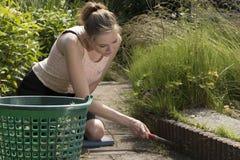 拉扯杂草的妇女在庭院 库存照片