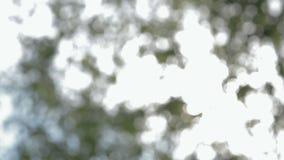 拉扯焦点自然背景被弄脏的叶子 股票录像
