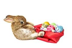 拉扯袋子的兔子 图库摄影