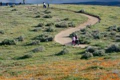 拉提纳母亲和女儿在沙漠花菱草领域前面在道路有橙色和黄色花的 库存图片
