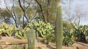 拉斯维加斯植物园  免版税库存图片