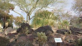 拉斯维加斯植物园  库存照片