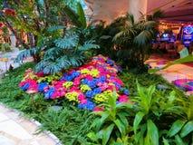 拉斯维加斯,美利坚合众国- 2016年5月06日:Wynn旅馆和赌博娱乐场的花设施 免版税图库摄影