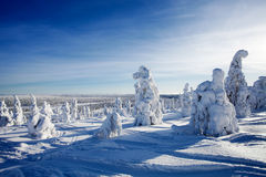 拉普兰芬兰 免版税图库摄影