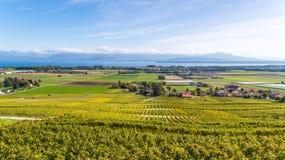 拉沃葡萄园梯田地区的葡萄园在湖Leman & x28的; Geneva& x29湖; 免版税库存照片