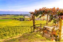 拉沃葡萄园梯田地区的葡萄园在湖Leman & x28的; Geneva& x29湖; 库存图片