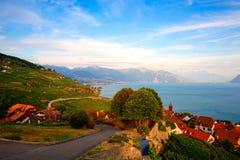 拉沃葡萄园梯田地区的葡萄园,瑞士 免版税库存照片