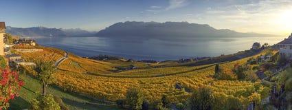 拉沃葡萄园梯田地区的,沃州,瑞士全景 免版税库存照片
