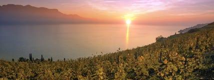拉沃葡萄园梯田地区的,沃州,瑞士全景 库存图片