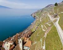 拉沃葡萄园梯田是在沃州小行政区的一个区域在瑞士 库存照片
