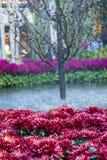 贝拉焦旅馆音乐学院&植物园 免版税库存图片