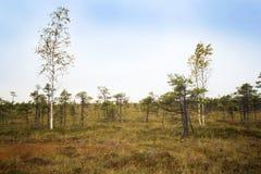 拉脱维亚 在沼泽Dunikas的美好的颜色 图库摄影