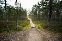 拉脱维亚 在沼泽Dunikas的美好的颜色 库存图片