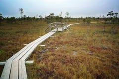 拉脱维亚 在沼泽Dunikas的美好的颜色 免版税库存照片