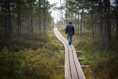 拉脱维亚 在沼泽Dunikas的美好的颜色 免版税库存图片