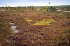 拉脱维亚 在沼泽Kemeri的美好的颜色 库存照片