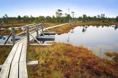 拉脱维亚 在沼泽Kemeri的美好的颜色 图库摄影
