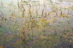 拉脱维亚 在沼泽Kemeri的美好的颜色 免版税图库摄影