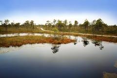 拉脱维亚 在沼泽Kemeri的美好的颜色 免版税库存图片