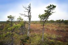拉脱维亚 在沼泽Kemeri的美好的颜色 库存图片