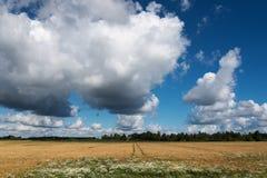 拉脱维亚夏天lanscape 图库摄影