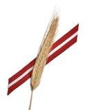 拉脱维亚旗子丝带和麦子 库存照片