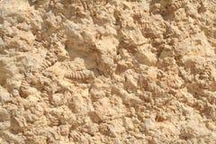 从拉蒙火山口的化石 免版税图库摄影