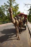 拉购物车的骆驼在印度 免版税库存图片