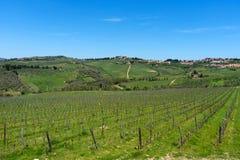 拉达伊恩基亚恩蒂和葡萄园和橄榄树在Chianti地区,托斯卡纳,意大利全景美丽的景色  库存照片