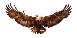 拉长的剪影上色了在白色背景的老鹰 皇族释放例证