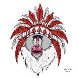 拉长的猴子 在一个当地美洲印第安人院长的Mandrill 红色和黑蟑螂 老鹰印地安羽毛头饰  传染媒介illustrat 皇族释放例证