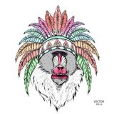 拉长的猴子 在一个当地美洲印第安人院长的Mandrill 红色和黑蟑螂 老鹰印地安羽毛头饰  传染媒介illustrat 向量例证