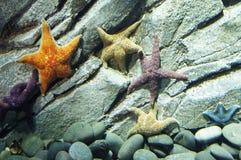 拉长的现有量例证原始海星样式葡萄酒 库存图片