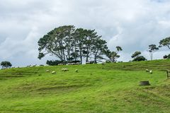 拉长的现有量小山例证绵羊 库存图片