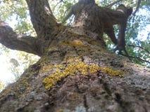 拉长的现有量查出的夏天结构树向量白色 库存照片