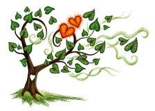 拉长的现有量查出的夏天结构树向量白色 免版税库存图片