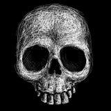 拉长的现有量头骨 免版税库存图片