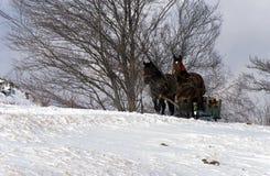 拉长的马雪橇 库存图片