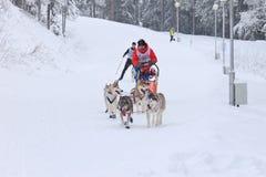 拉雪橇狗赛跑、狗和司机在竞争时 免版税库存图片