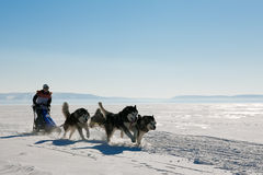 拉雪橇狗赛跑爱斯基摩在冬天 库存图片
