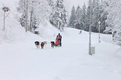 拉雪橇狗赛跑,狗队在冬天路的竞争时 免版税图库摄影