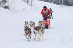 拉雪橇狗赛跑,狗队在竞争时 免版税库存图片
