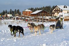 拉雪橇狗赛跑 库存照片