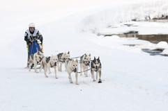 拉雪橇狗Musher和队  库存照片
