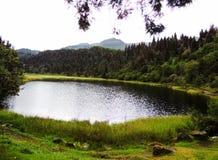 拉维多利亚盐水湖在森林里 库存照片