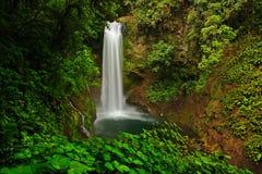 拉巴斯瀑布从事园艺,与绿色热带森林,中央谷地,哥斯达黎加 免版税图库摄影