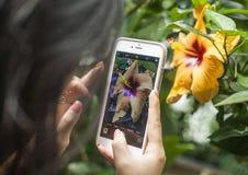 拍一朵黄色花的照片, Kew庭院,伦敦 免版税库存图片