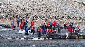 拍摄企鹅的游人 库存照片
