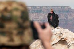 拍摄在大峡谷的一只神鹰 免版税库存图片