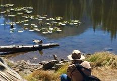 拍摄在山湖的鸭子 免版税库存照片